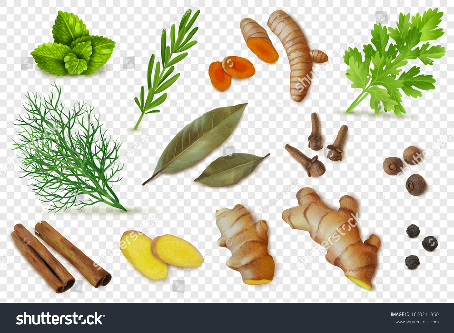 Herbs, dry spices and spicy roots set. Realistic style. Textured items. Isolated objects cillection. Ginger, turmeric, slices, roots, Bay leaf, pepper. Transparent background.Vector illustration #1660211950