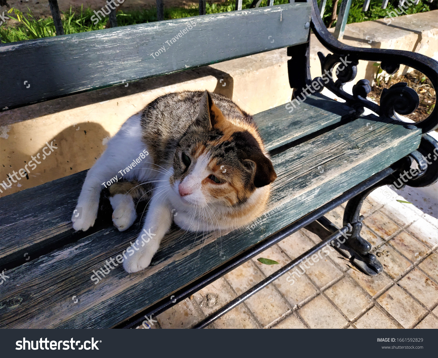 Close up of cat (calico cat) in a park bench that has just woke up.