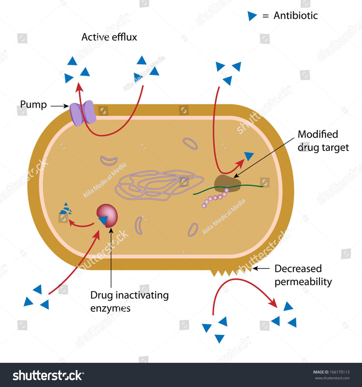 Mechanism Antibiotic Resistance Bacteria Labeled Diagram
