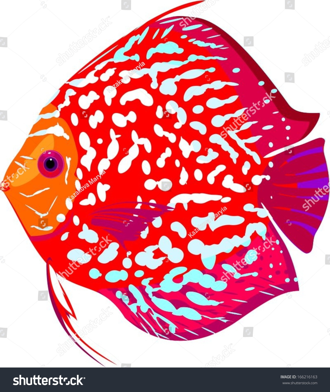 Red Leopard Discus Fish Stock Photo (Photo, Vector, Illustration ...