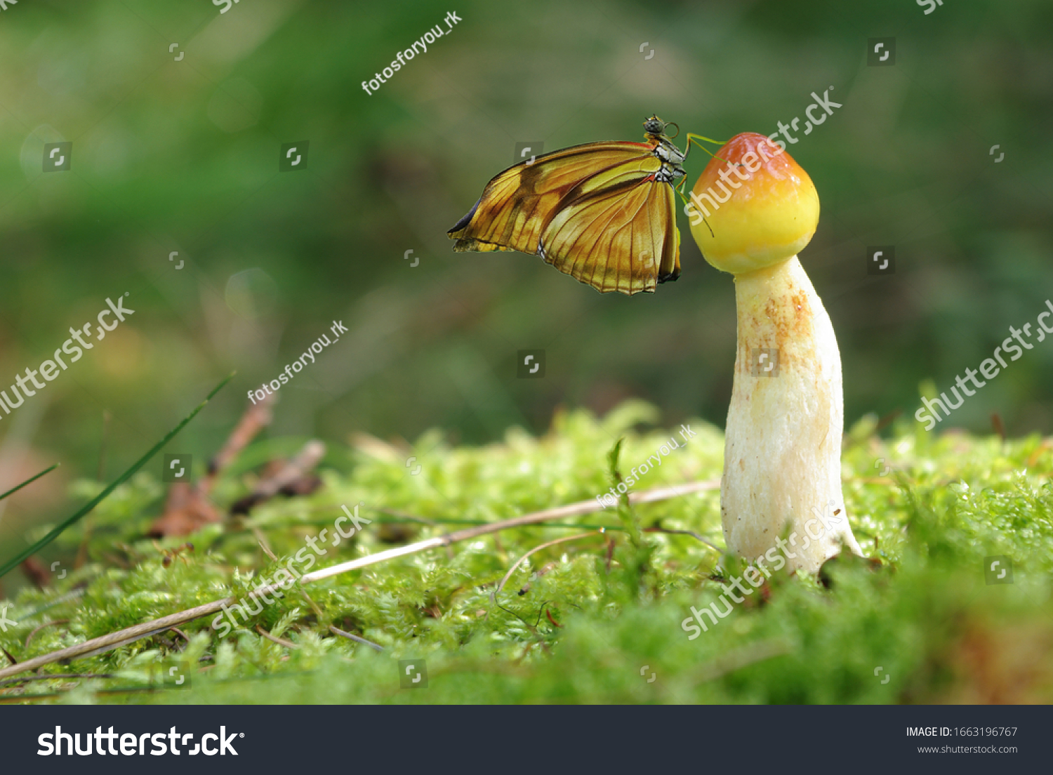 A beautiful little butterfly seen from the side is sitting on a mushroom. Cute mushroom in the summer with butterfly and ladybug.