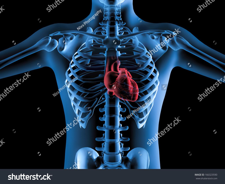 3d Xray Image Human Body Heart Stock Illustration 166323590 ...