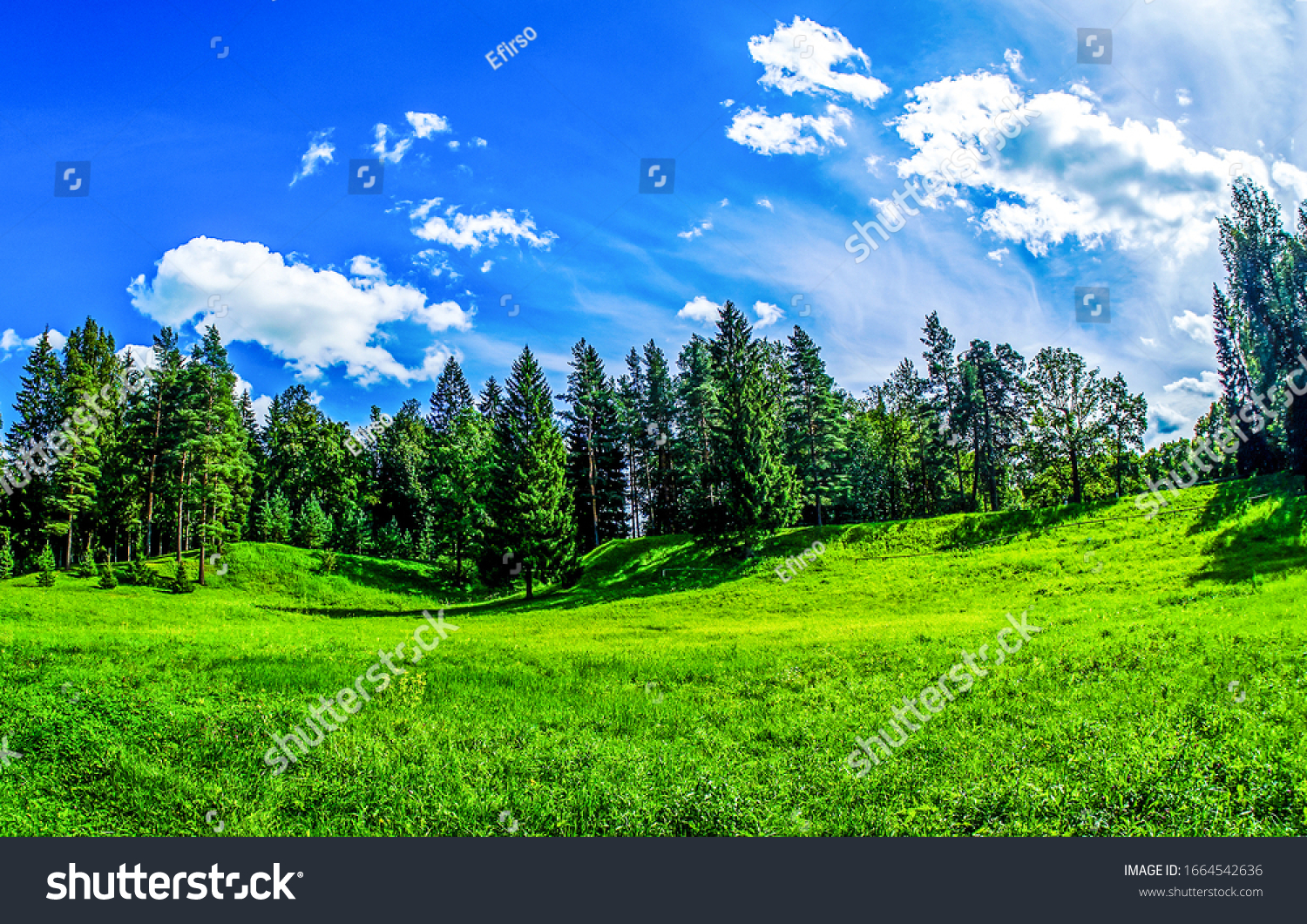 Summer green forest meadow in sunny day. Forest meadow in summer. Summer green forest meadow landscape #1664542636