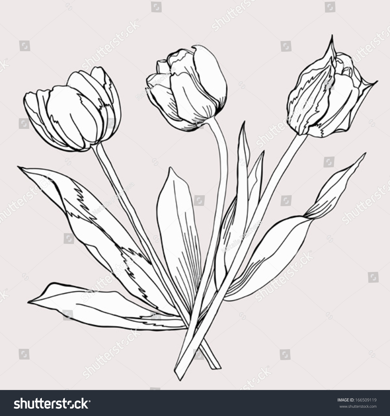 royalty free bouquet of tulip sketch black and 166509119 stock