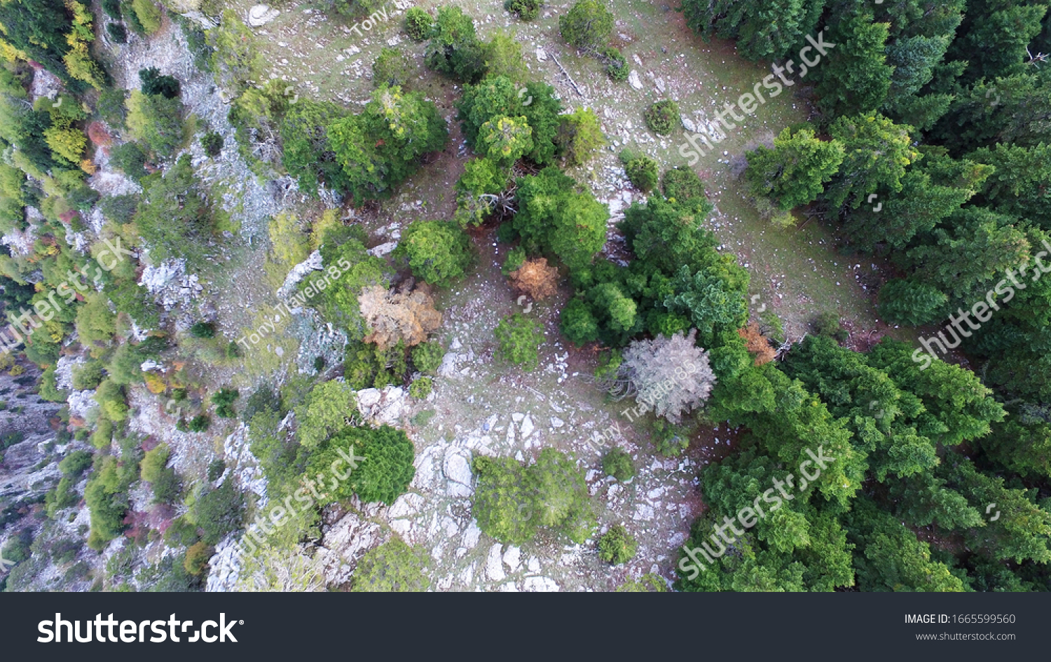 Drone photography of a lush pine forest.