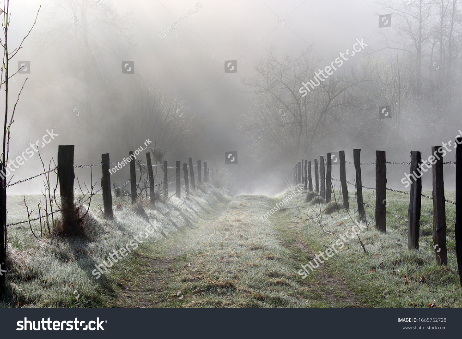 frost on a morning walk in the sauerland in germany