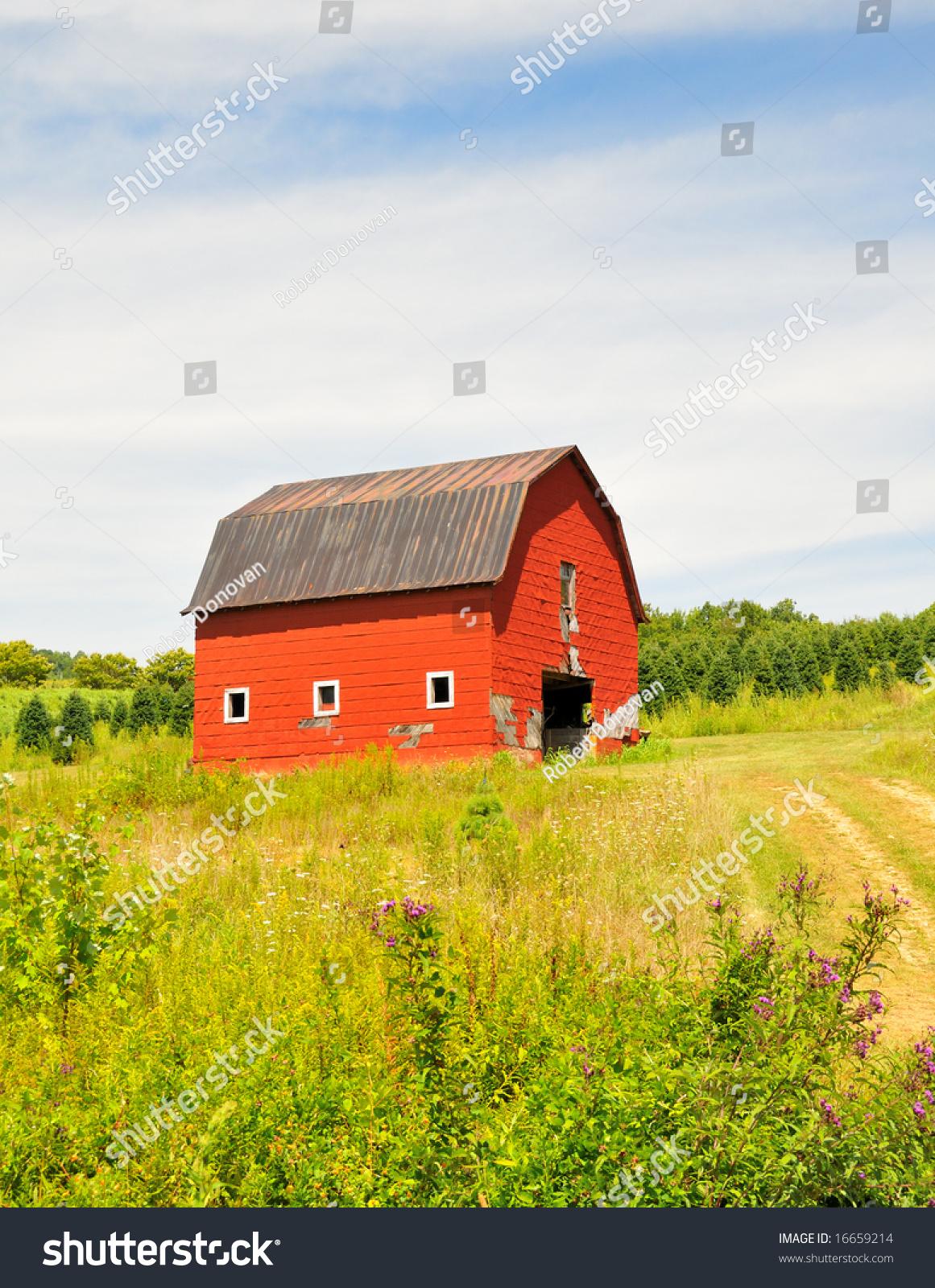 Old Red Barn Christmas Tree Farm Stock Photo (Edit Now) 16659214 ...