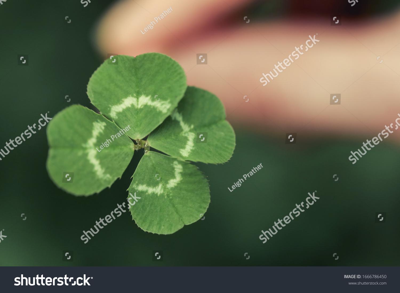 Holding a lucky four leaf clover, good luck shamrock, or lucky charm. #1666786450