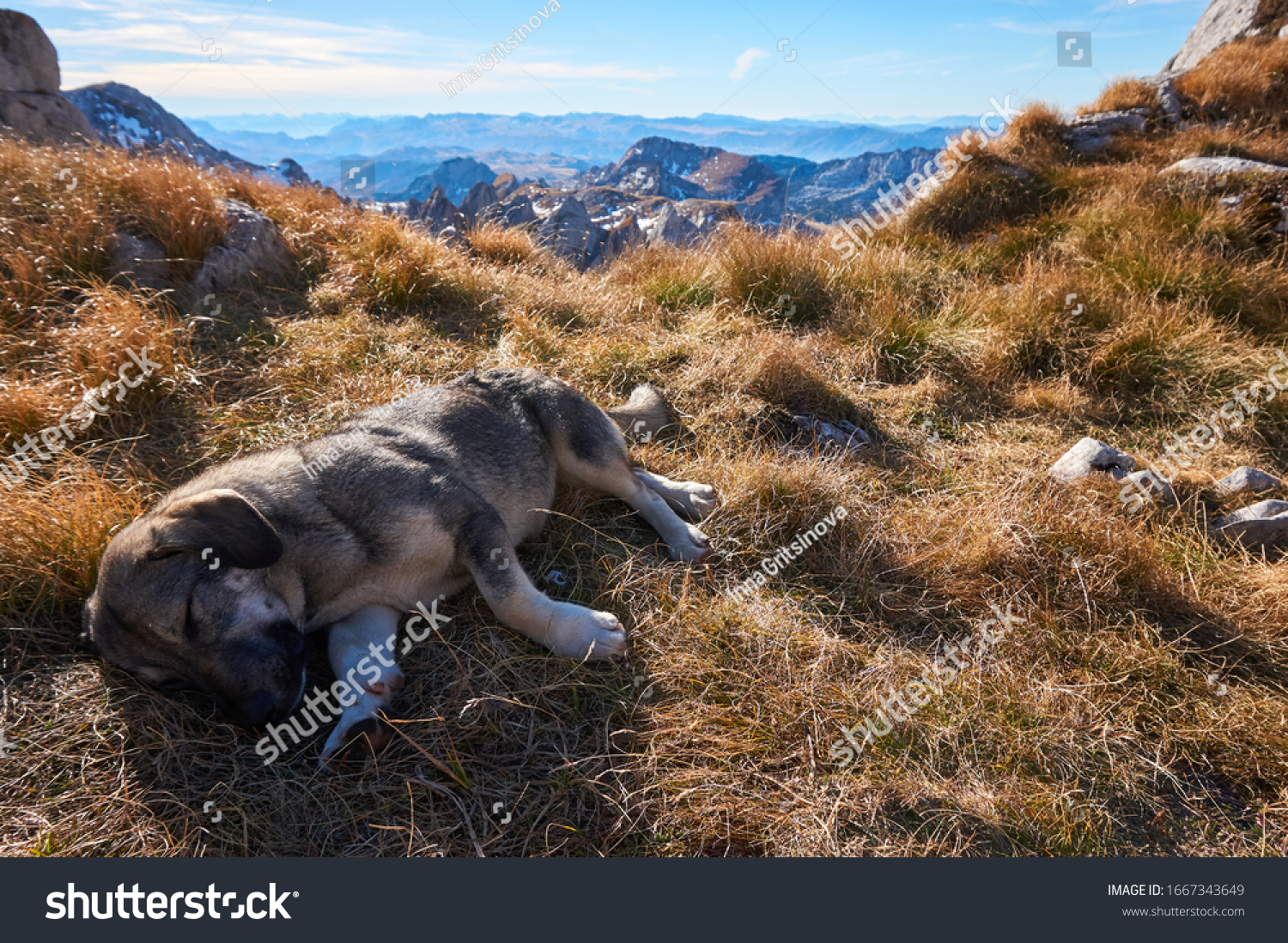 stock-photo-dog-at-nature-durmitor-lands