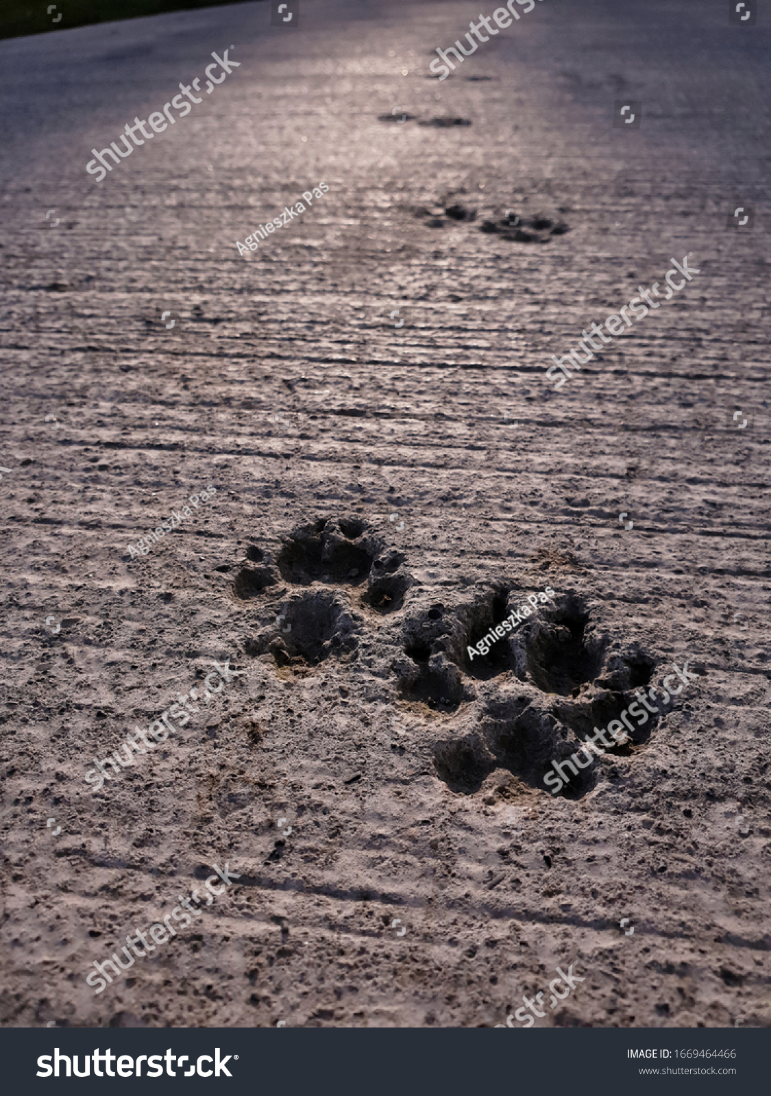 stock-photo-a-closeup-view-of-dog-footpr