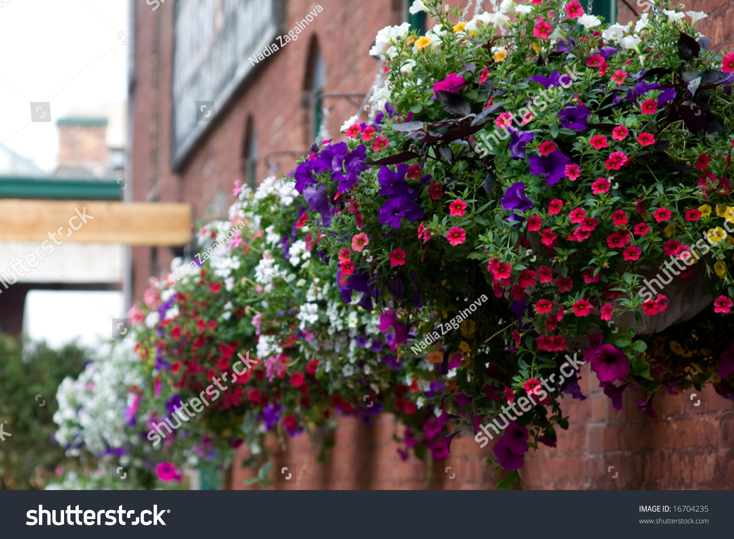 Various Flowers Hanging Baskets On Brick Stock Photo 16704235 ...
