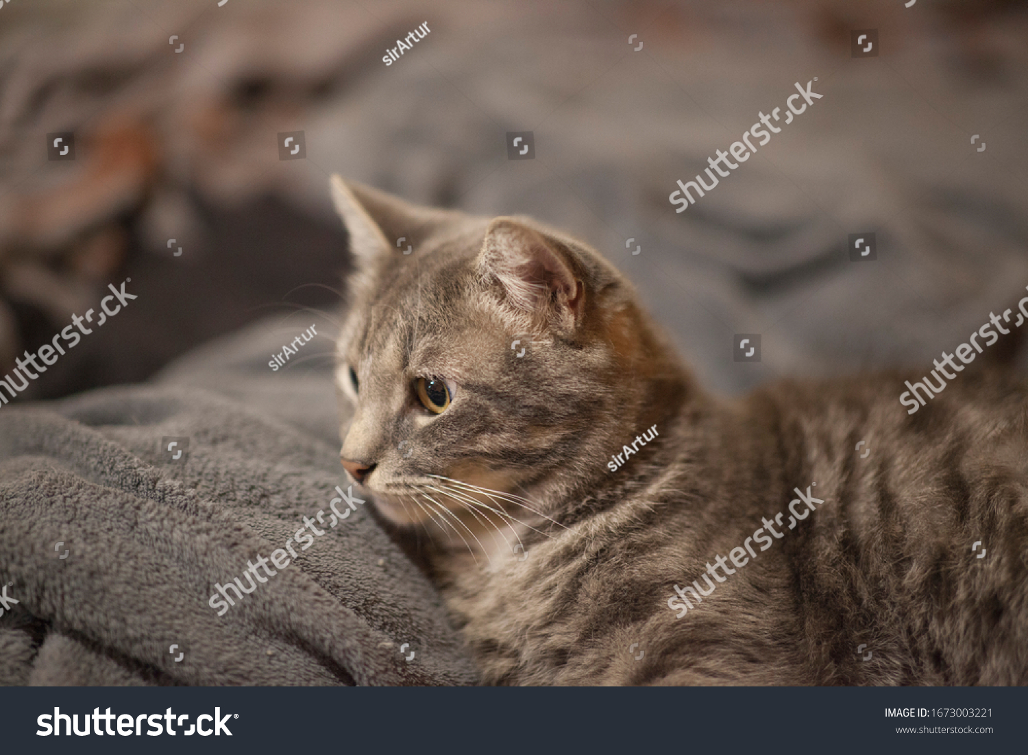 stock-photo-the-image-of-one-cat-a-portr