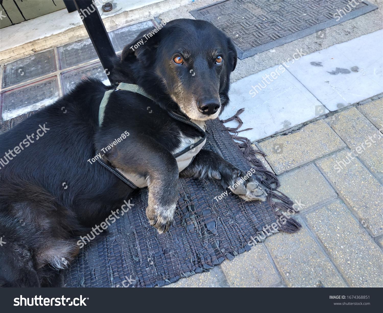 Ein schwarzer Hund entspannt sich auf dem Boden.