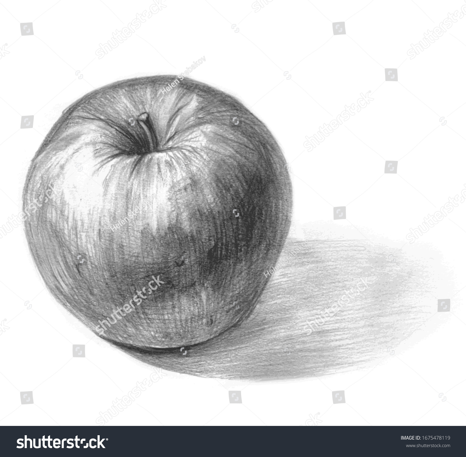 Apple Pencil Sketch On White Background Stock Vector Royalty Free 1675478119
