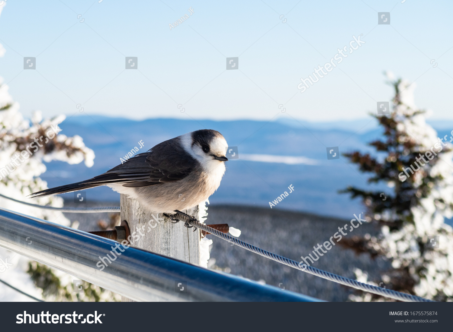 stock-photo-closeup-of-a-beautiful-canad