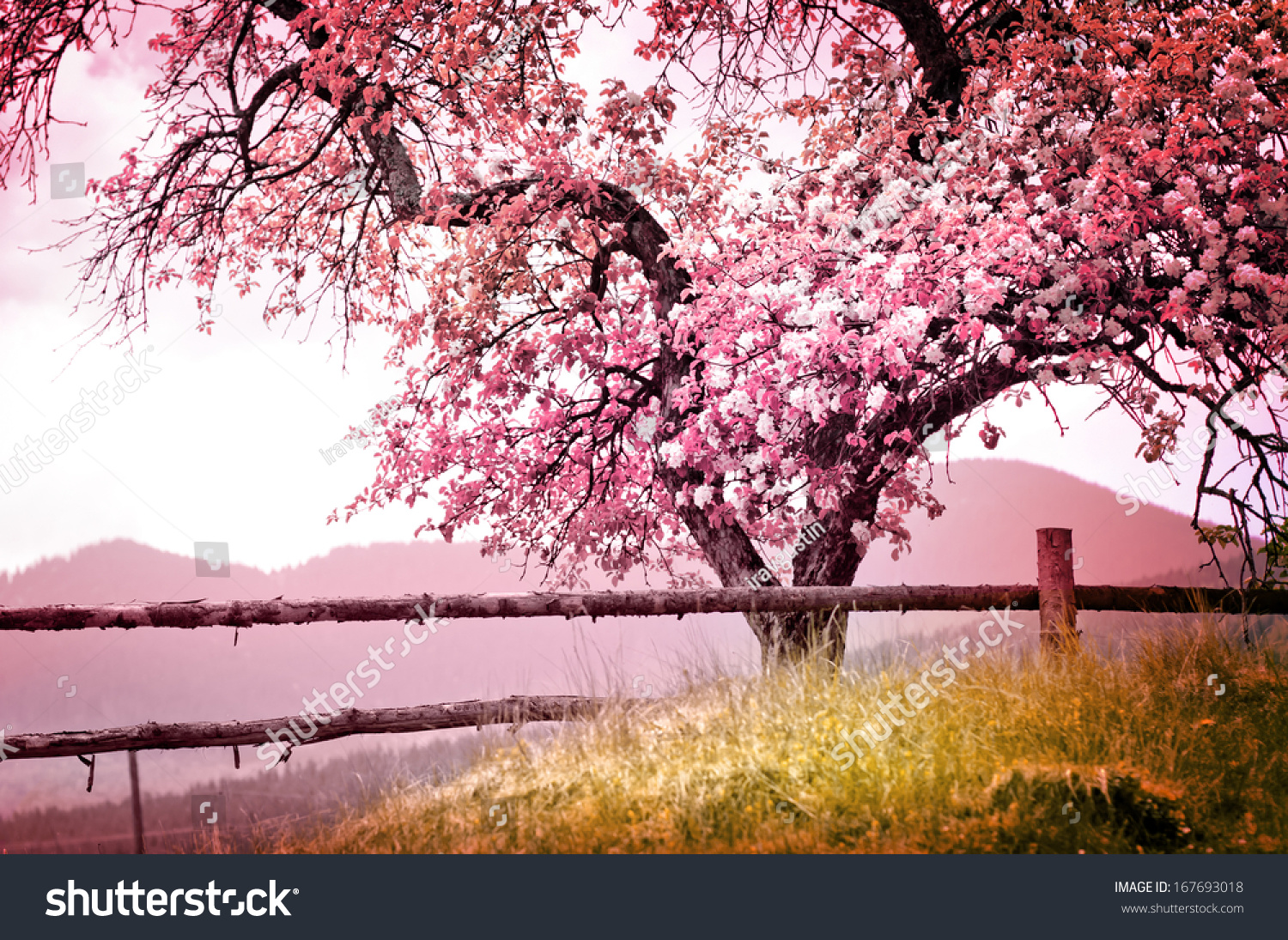blossom tree over nature background spring stock photo edit now