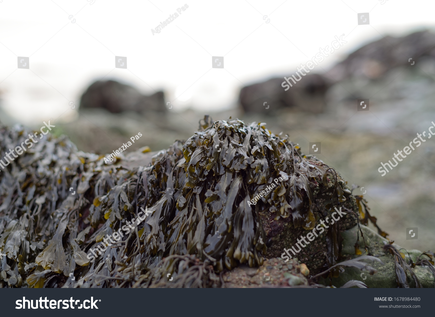 stock-photo-a-close-up-view-of-the-brown