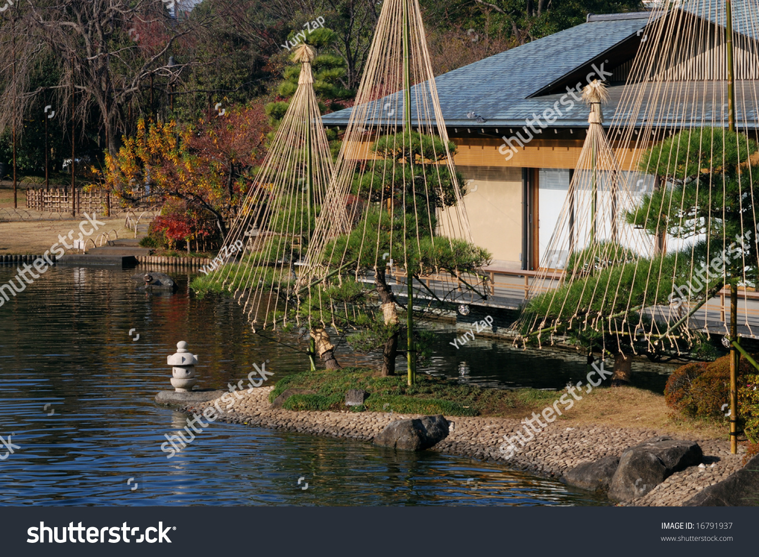 Japanese garden background with pond pine trees small lantern and part of traditional house