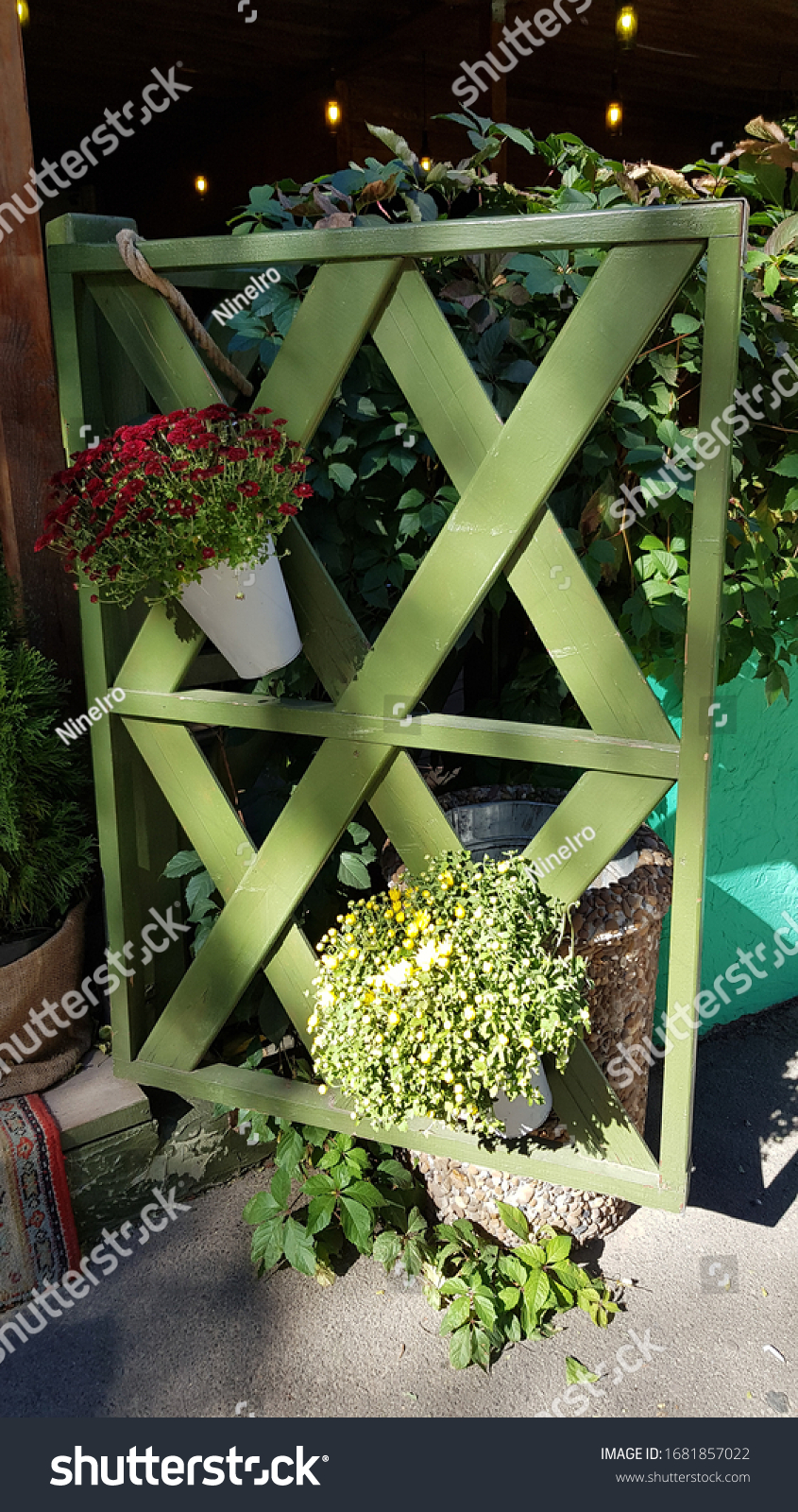 Rustic wooden fence of crossed timber planks painted in green color with hanging flower pots of blooming chrysanthemum bushes. Autumn sunny day.  #1681857022