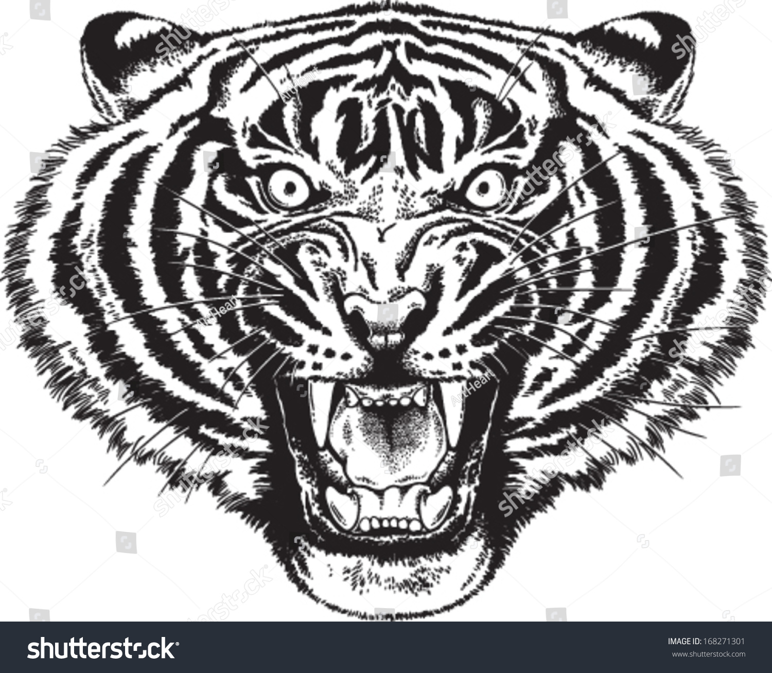 Black White Vector Sketch Angry Tiger Stock Vector ...