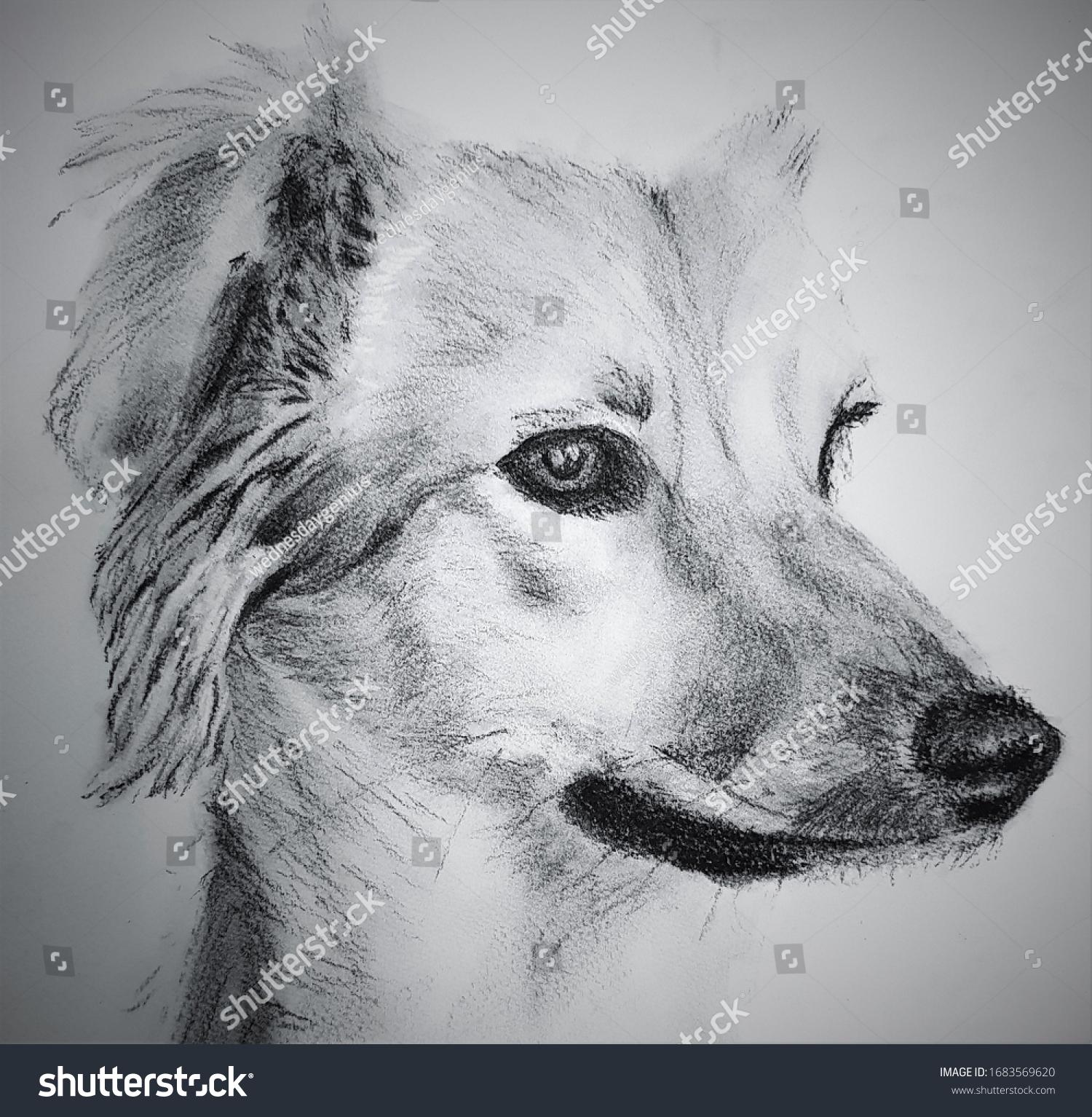 Pencil Sketch Dog Side View Dog Stock Illustration 1683569620