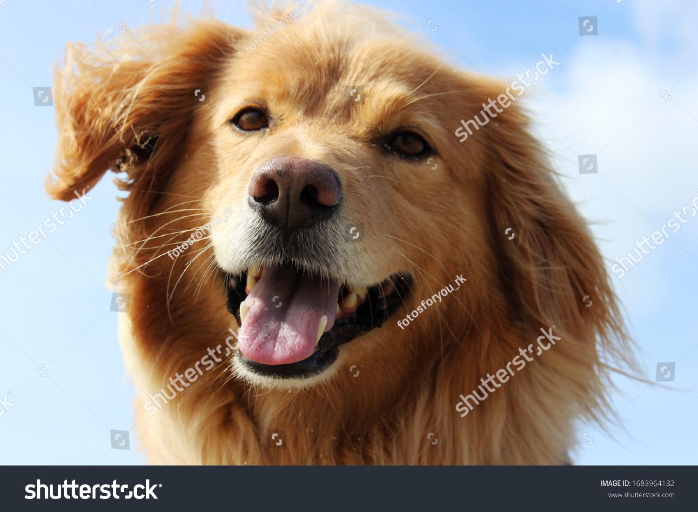 Dogs portrait shot against a blue sky