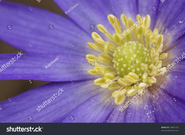 Beautiful Purple And Yellow Flowers