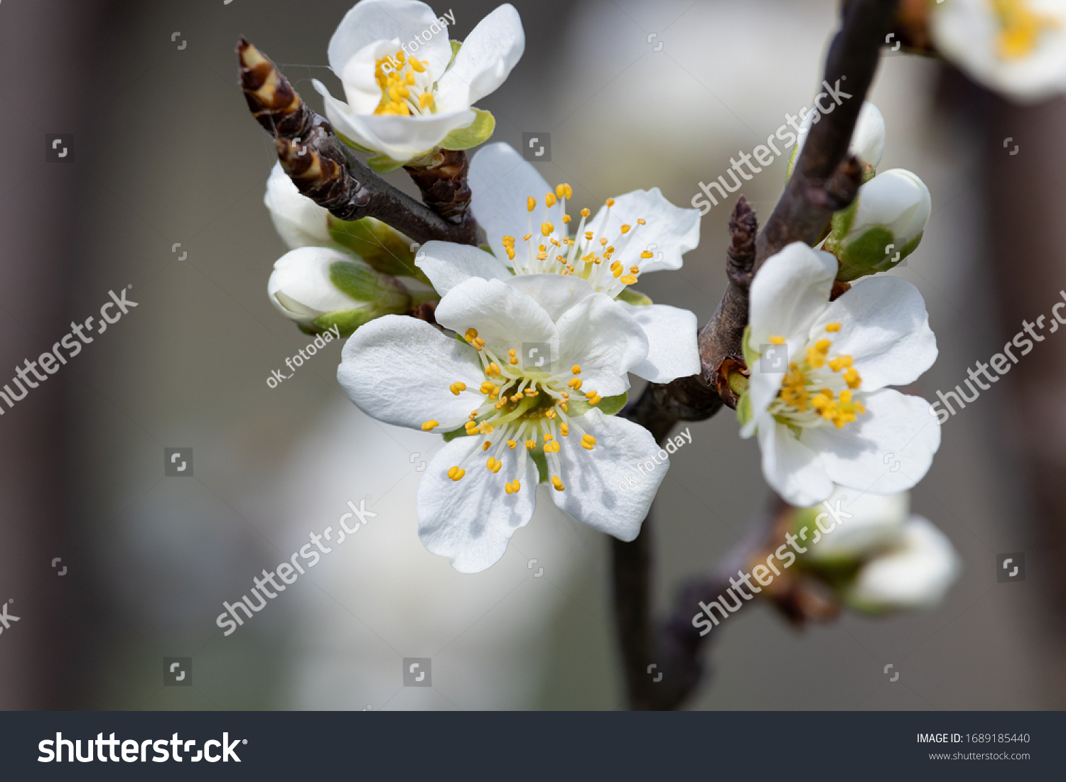 stock-photo-spring-white-flowers-with-ye