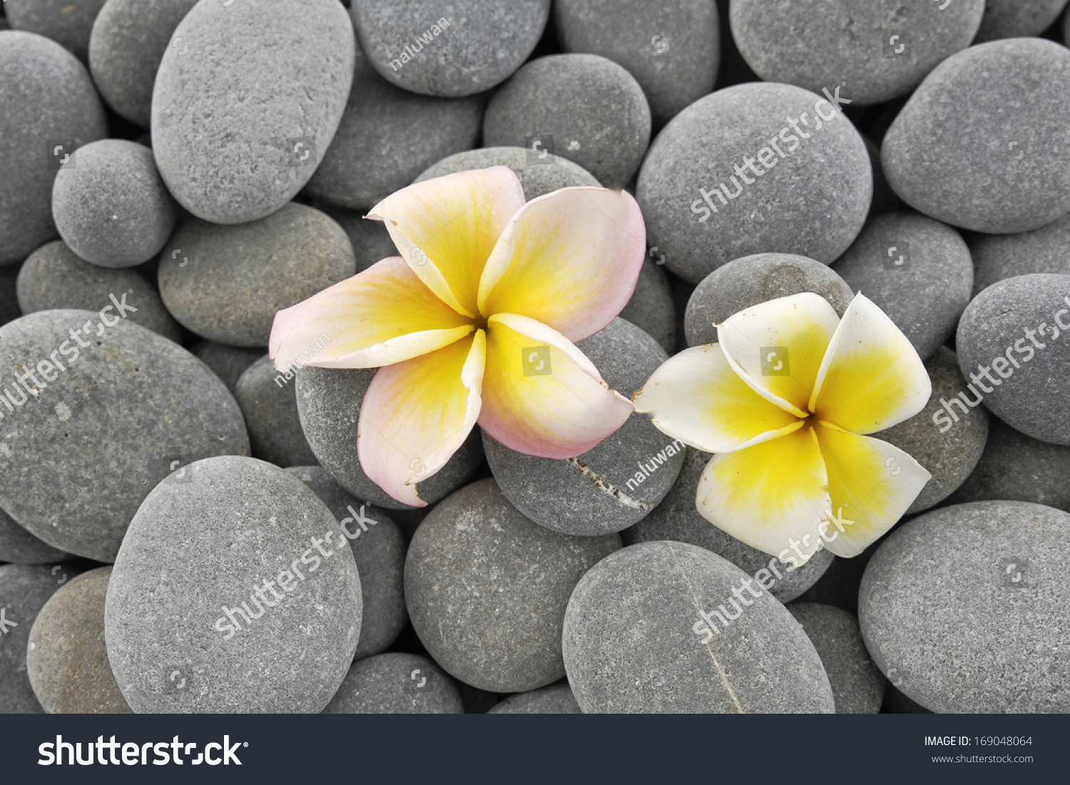 White Frangipani Flowers And Candle On Gray Pebbles Texture Ez Canvas