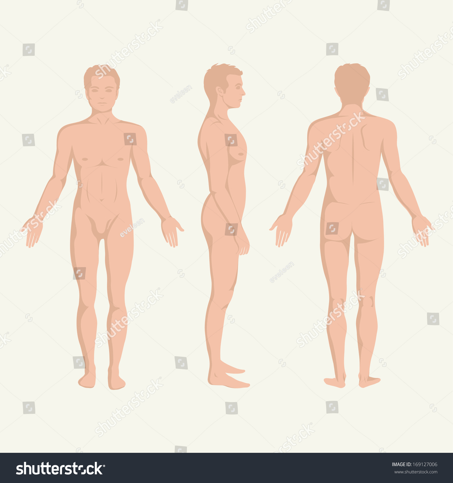 Man Body Anatomy Front Back Side Stock Vector Royalty Free