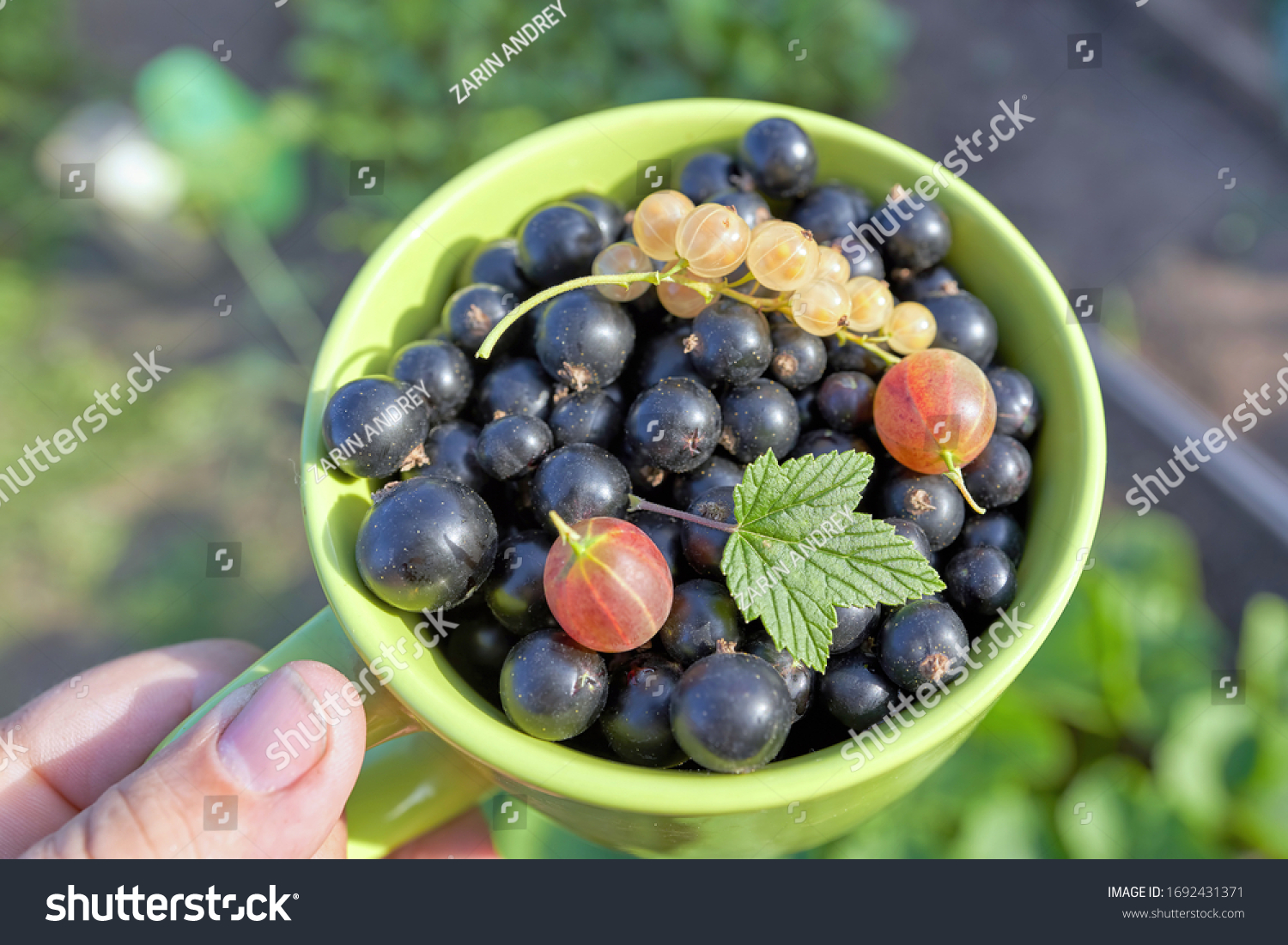 Mug with white berries and Cassis, crygenic and green leaves on top. Sunny summer day, close up #1692431371