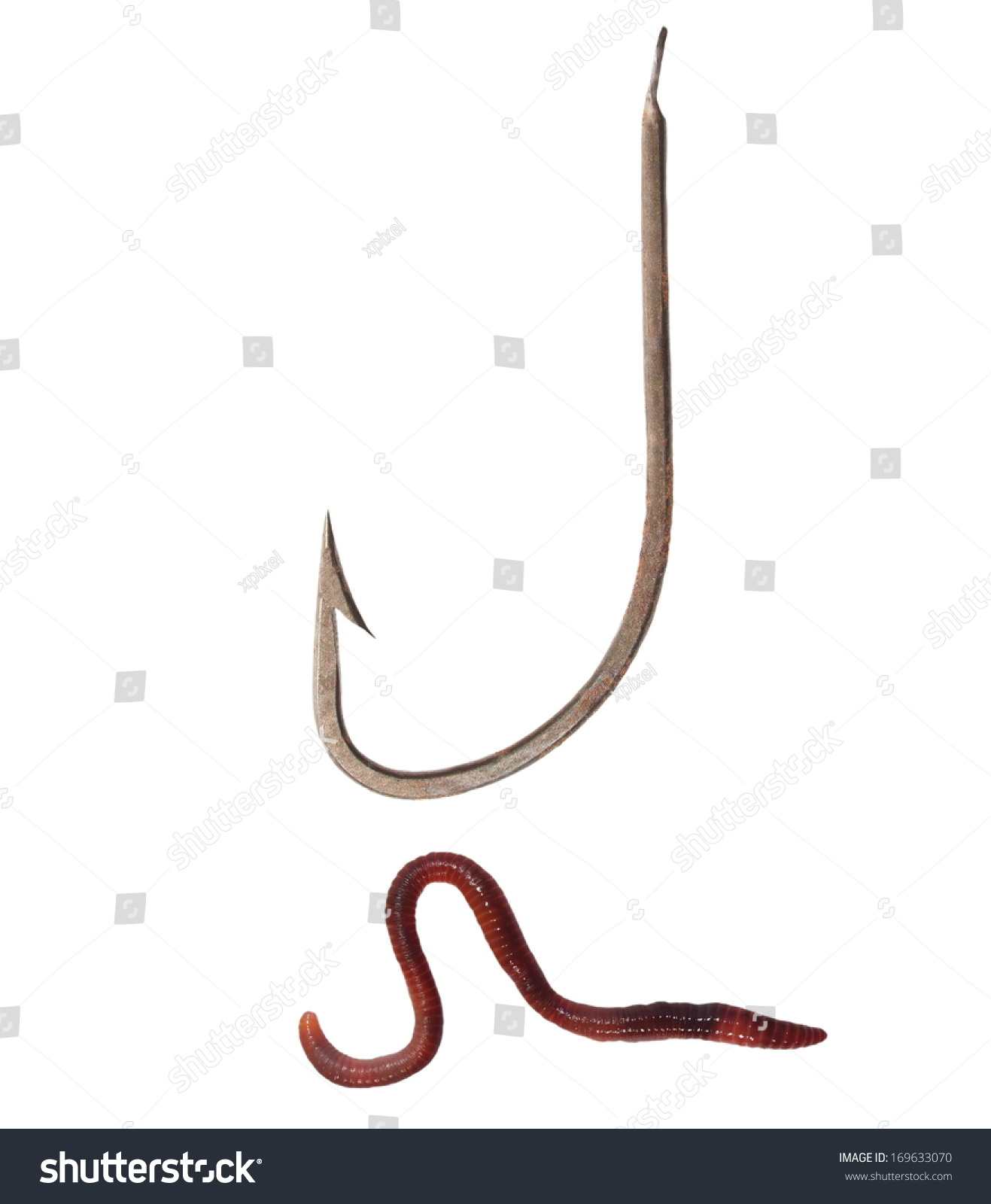 Old rusty fishing hook and earthworm brandling worm for Mealworms for fishing