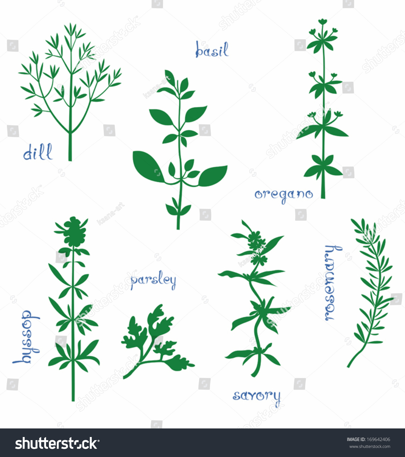 Set Various Aromatic Herbs Names Silhouettes Stock Vector ...