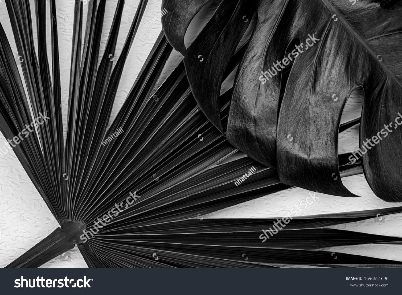 Natural palm leaves on white background. Dark botanical art background with monstera leaf.  Black colored plants. Natural leaf of monstera palm. #1696651696