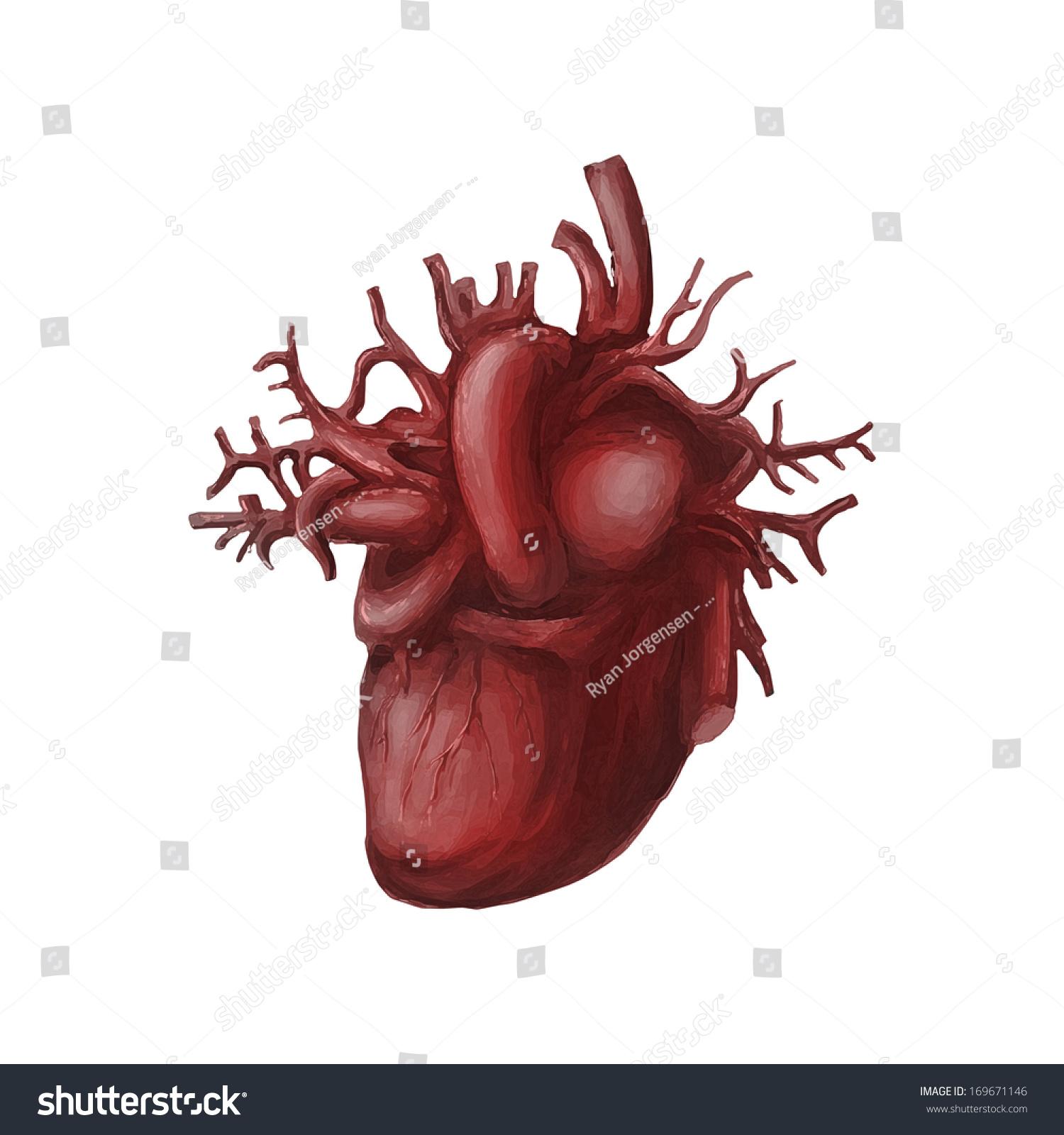 Digital Painting Illustration Human Heart Organ Stock Photo Edit