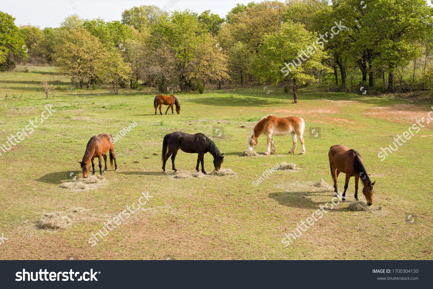 stock-photo-aerial-view-of-five-horses-e