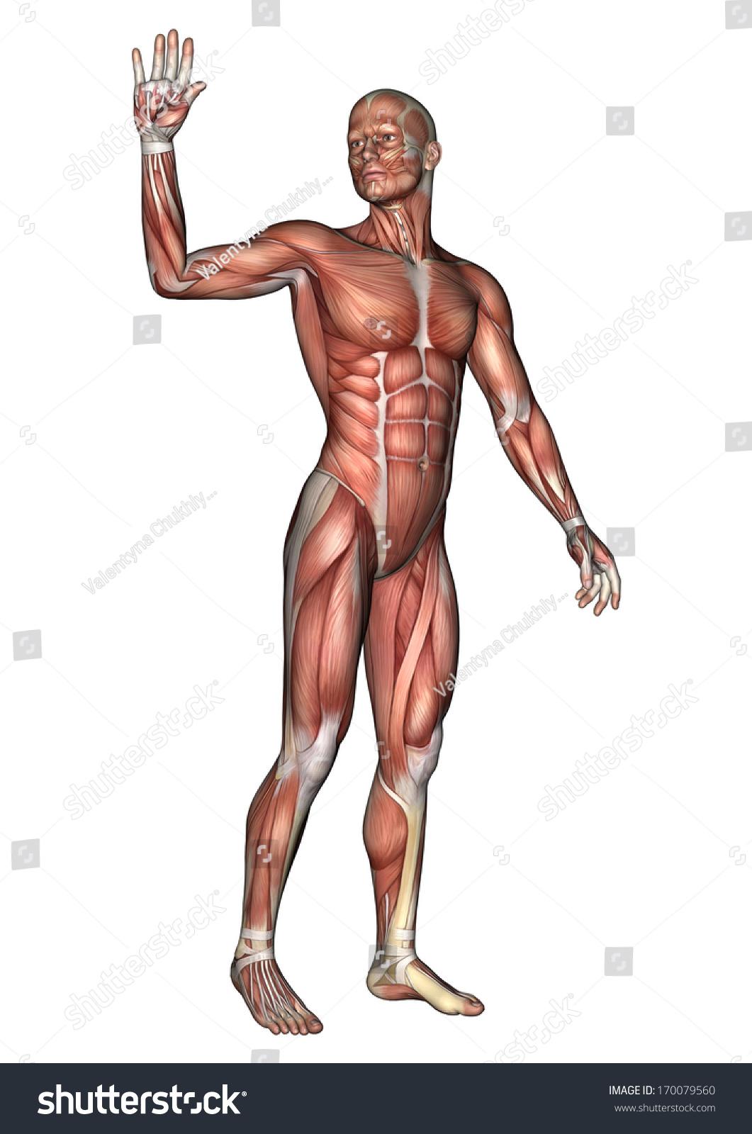 3 D Digital Render Male Anatomy Figure Stock Illustration Royalty
