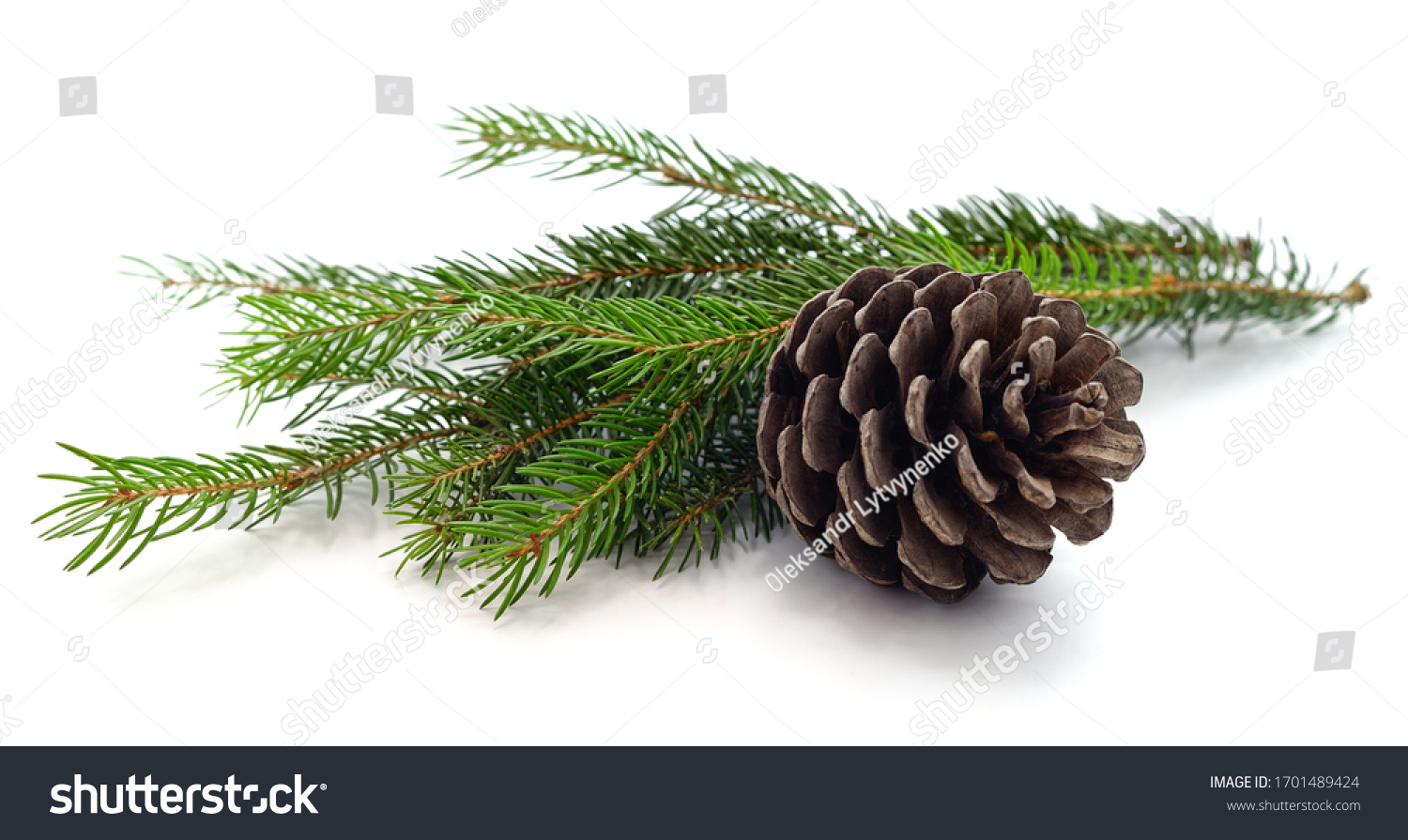 Cones and christmas tree isolated on a white background. #1701489424