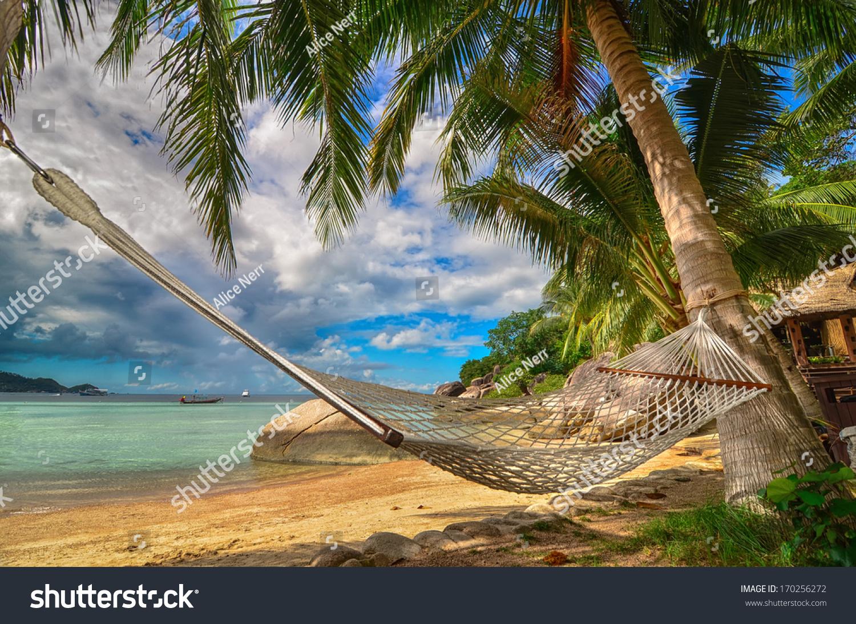 Tropical Paradise Hammock Between Palm Trees Stock Photo
