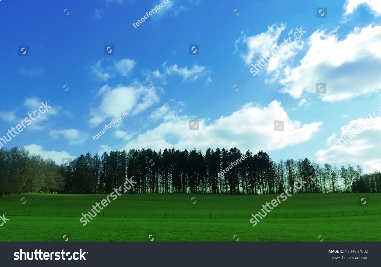 Aussicht auf viele Tannenbäume am blauen Himmel