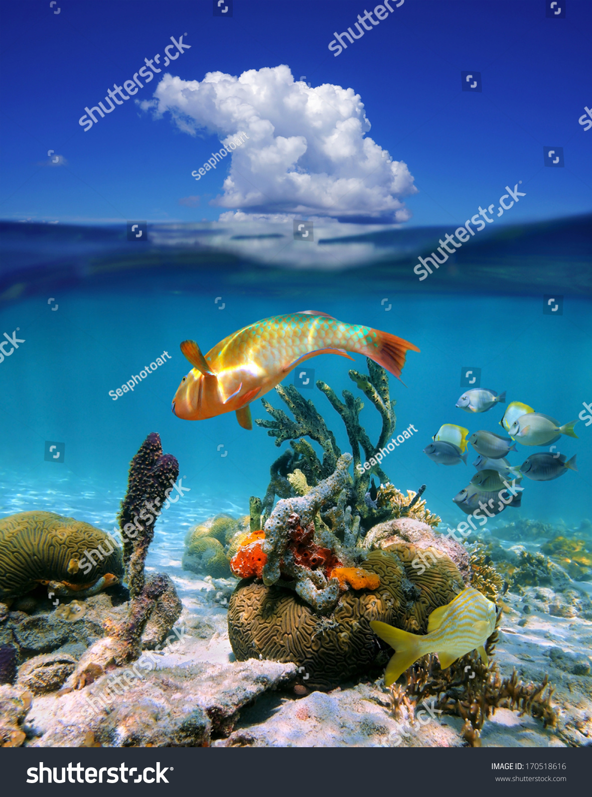 40 Brilliant Photographs of Undersea Life - DesignM.ag |Colorful Underwater Life