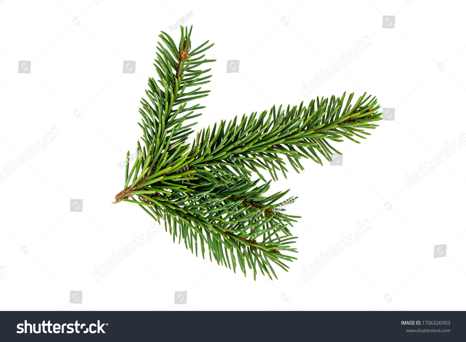 Top view of green fir tree spruce branch with needles isolated on white background #1706326903