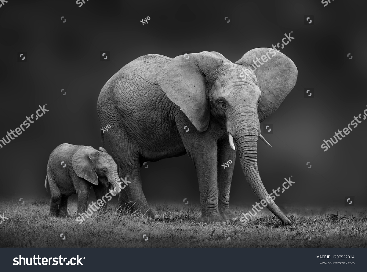 African elephant mother and son #1707522004