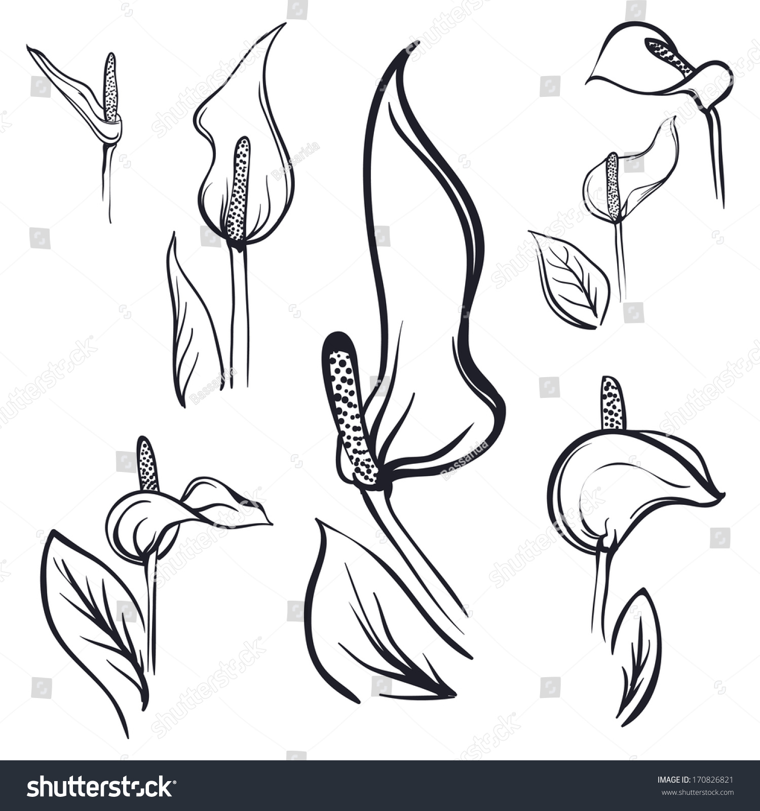 how to draw a calla lily youtube