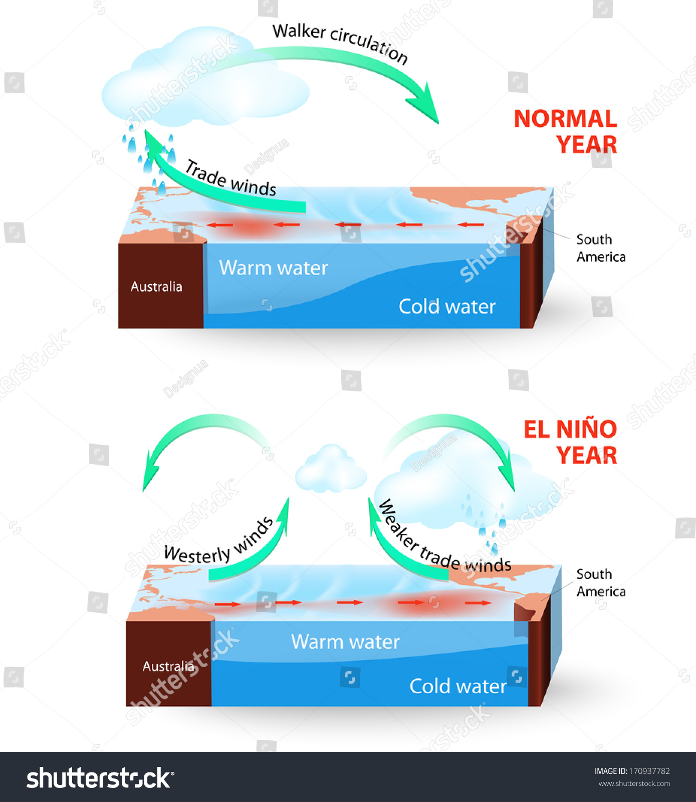 Cross Section El Nino Southern Oscillation Stock Illustration ...