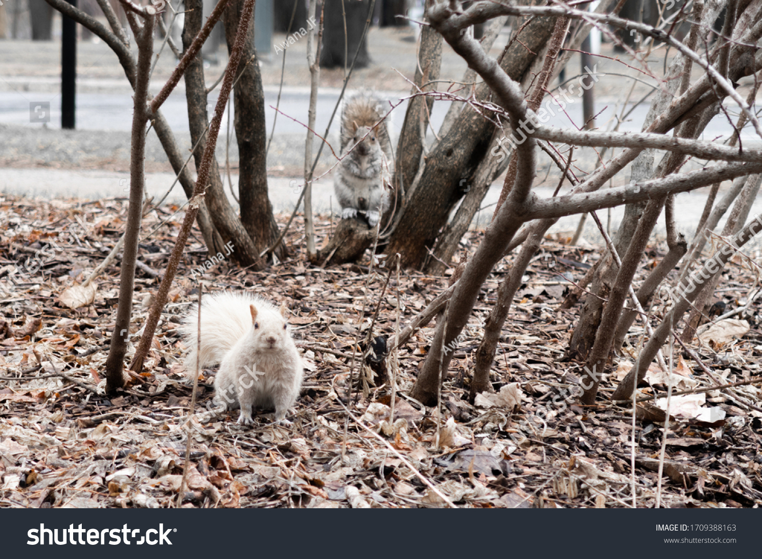 stock-photo-view-of-a-rare-albinos-squir