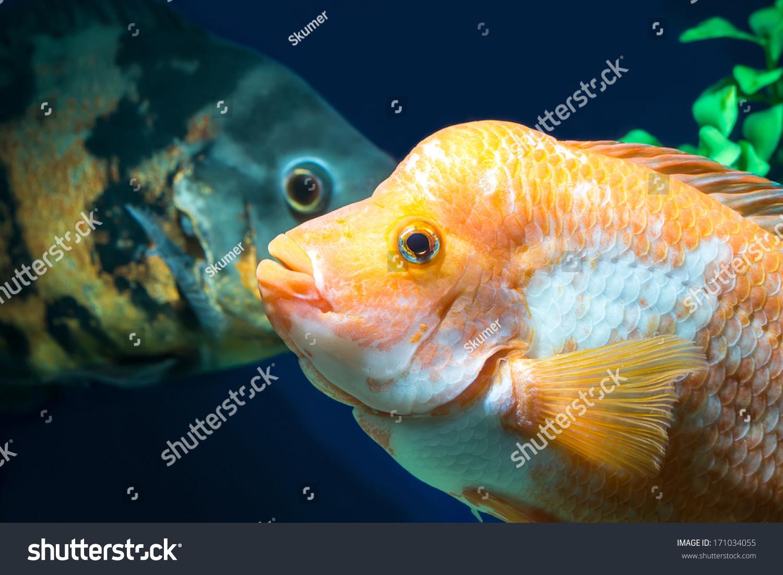 Fish in big aquarium - Big Aquarium Fish In Water