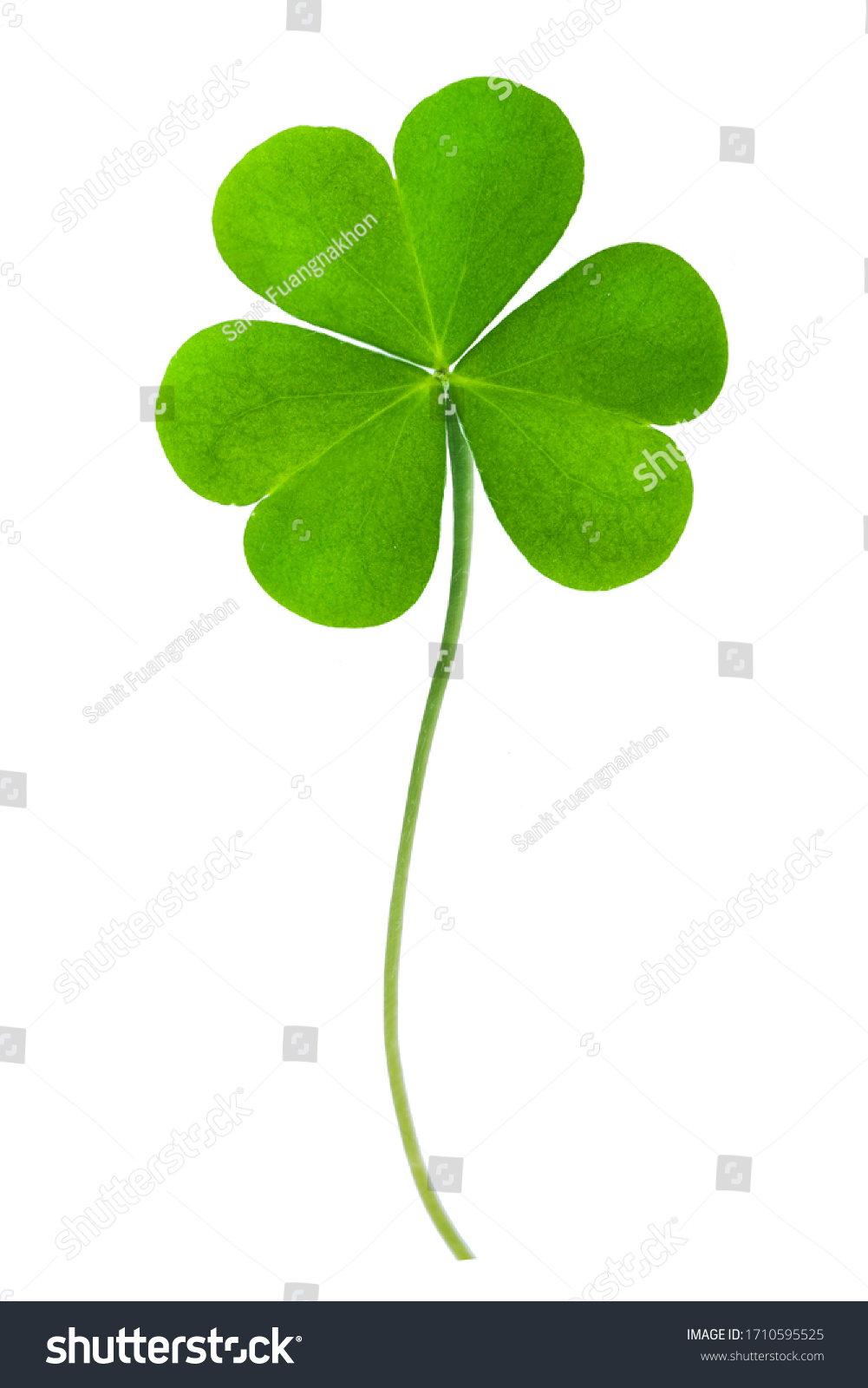 Green clover leaf isolated on white background. This has clipping path. #1710595525