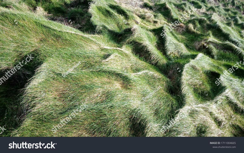 Beautiful green grass texture background lawn