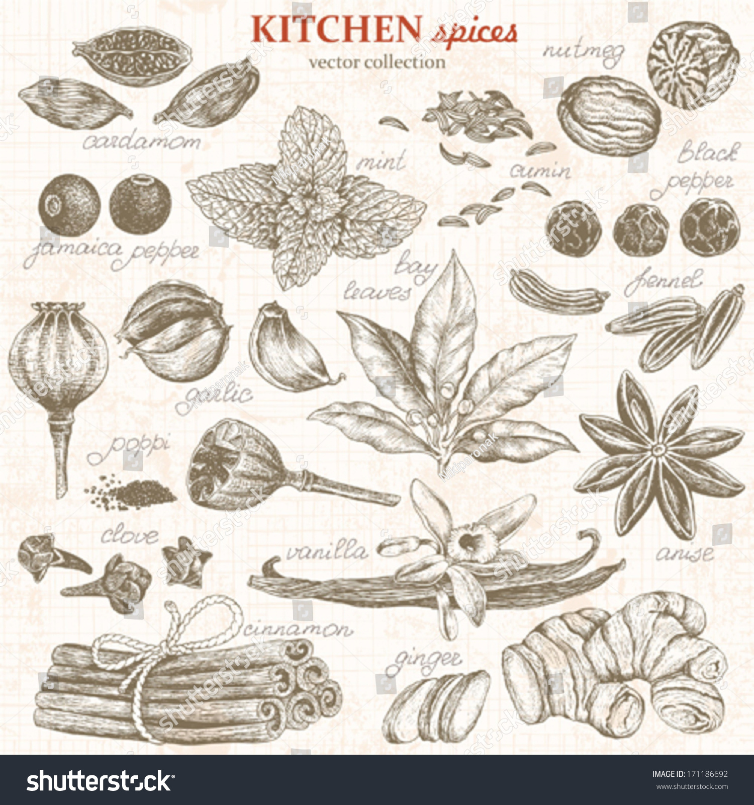 collection kitchen spices handdrawn vector illustration stock, Kitchen design